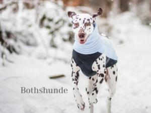 Rückruf Anleitung Hund, Abrufen Hund, zuverlässiger Rückruf