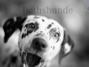 Bindung zu Hund aufbauen, Hund Mensch Bindung, stärken fördern Test, vertiefen, Übungen