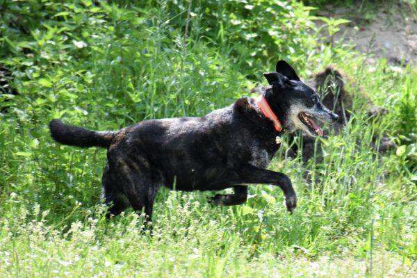 Rettungshund im Einsatz Magazin