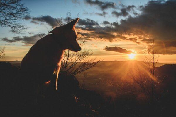 Vom Hund Abschied nehmen, Hund stirbt, Hund Tod verarbeiten